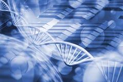 在键盘背景的基因链子 库存图片
