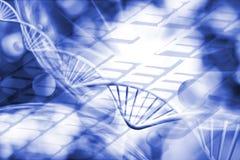 在键盘背景的基因链子 免版税库存图片
