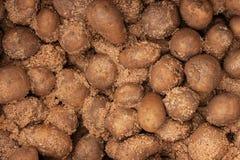 在锯木屑的土豆 免版税库存图片
