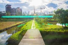 在镇和光亮的天空的稻田 免版税库存图片
