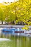在镇池塘的春天 免版税库存照片