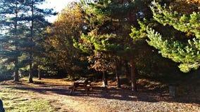 在镇的外部的野餐区 库存图片