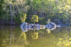 在镇静水和岩石反射的树 免版税库存照片