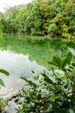 在镇静水湖的树反射在鲜绿色水池, Krabi附近 库存图片