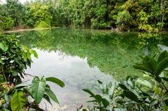 在镇静水湖的树反射在鲜绿色水池, Krabi附近 免版税图库摄影