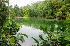 在镇静水湖的树反射在鲜绿色水池, Krabi附近 免版税库存照片