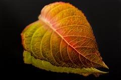在镜子反射的秋天叶子 免版税库存图片