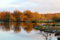 在镜子的四棵树 免版税库存照片