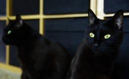 在镜子的猫 免版税库存照片