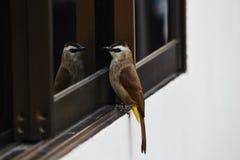 在镜子的鸟 库存照片
