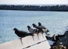 在长凳栖息的四只鸽子在海滩 库存图片