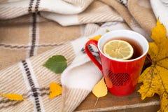 在长凳的一条毯子包裹的红色杯子,叶子 免版税库存图片