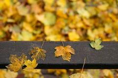 在长凳的下落的叶子 库存图片