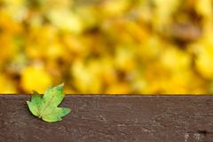 在长凳的下落的绿色事假 免版税库存图片