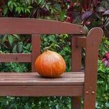 在长凳的南瓜 库存图片