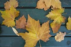 在长凳的叶子在公园在10月 库存照片
