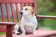 在长凳的小狗 免版税图库摄影