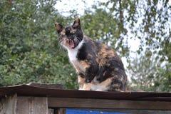 在长凳的村庄猫! 免版税库存照片
