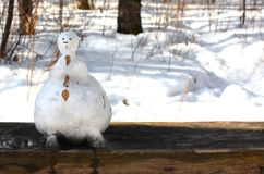 在长凳的森林里熔化的滑稽的雪人 库存图片