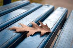 在长凳的橡木叶子 免版税库存图片