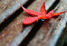 在长凳的湿红槭叶子 免版税库存图片