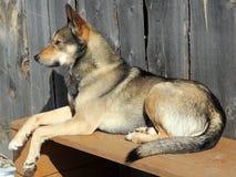 在长凳的狗 免版税库存照片