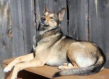 在长凳的狗 免版税库存图片