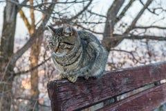 在长凳的猫 免版税库存照片