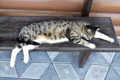 在长凳的猫 免版税库存图片