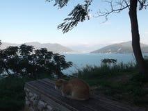 在长凳的猫 免版税图库摄影