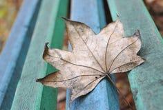 在长凳的秋叶 库存照片
