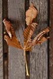 在长凳的秋天叶子 图库摄影