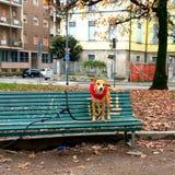 在长凳的要求逗人喜爱的小的小狗被采取 无家可归的狗希望找到新的家和所有者 库存照片