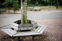 在长凳结构树附近 免版税库存照片