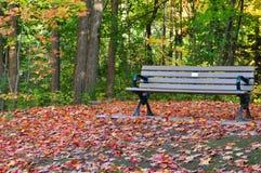 在长凳附近的划分为的叶子 免版税库存图片