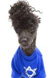 在长卷毛狗的光明节毛线衣 库存图片