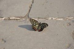 在长城的蝴蝶 库存图片