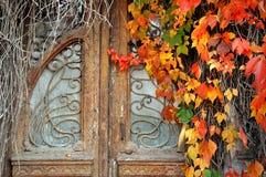 在长得太大的葡萄酒门与狂放的葡萄 库存照片