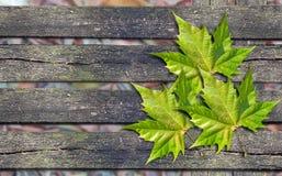 在长木凳的秋天绿色叶子与拷贝空间 免版税库存图片