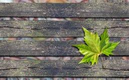 在长木凳的秋天绿色叶子与拷贝空间 免版税库存照片