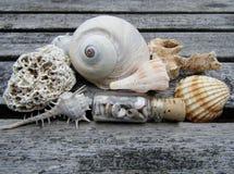 在长木凳的美丽的贝壳 免版税库存图片