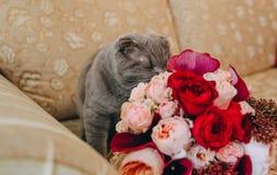 在长沙发嗅花玫瑰的灰色大猫 免版税库存照片
