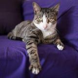在长沙发的可爱的特写镜头猫画象 库存照片