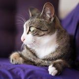在长沙发的可爱的特写镜头猫画象 库存图片