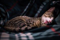 在长沙发的可爱的黑白猫画象 免版税库存图片
