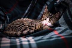 在长沙发的可爱的黑白猫画象 免版税库存照片