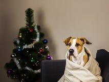 在长沙发的小狗在毛皮树前面的投掷毯子 库存图片