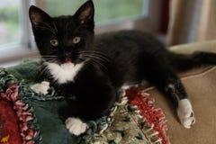 在长沙发的小猫 图库摄影