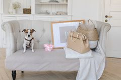在长沙发的小的小狗带着一个减速火箭的手提箱 免版税库存照片