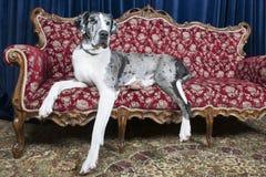 在长沙发的狗 免版税库存图片